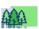 Отборный зимний хвойный лес из Пскова (диаметр 24-26 см)